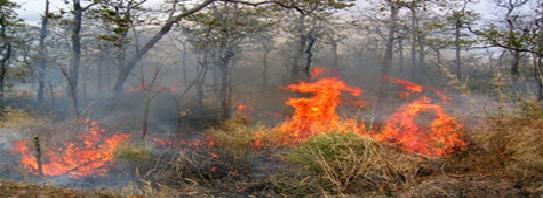 Hình Ảnh Khô Hạn Gây Cháy Rừng